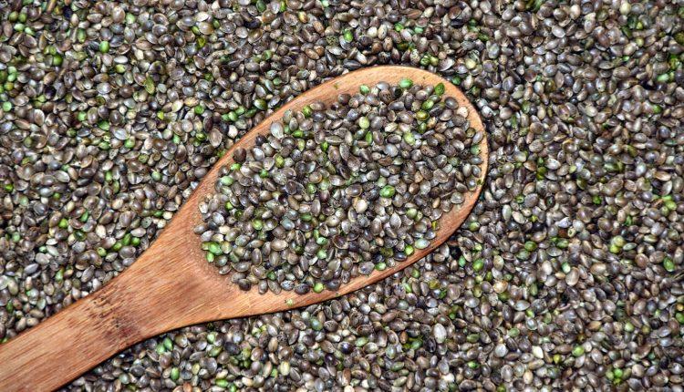 semi di canapa (2)